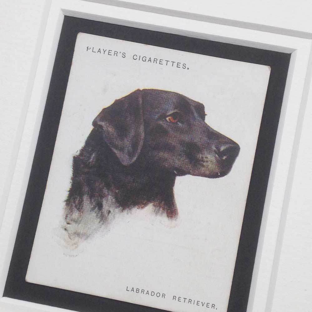 Black Labrador Retriever Vintage Gifts - The Enlightened Hound