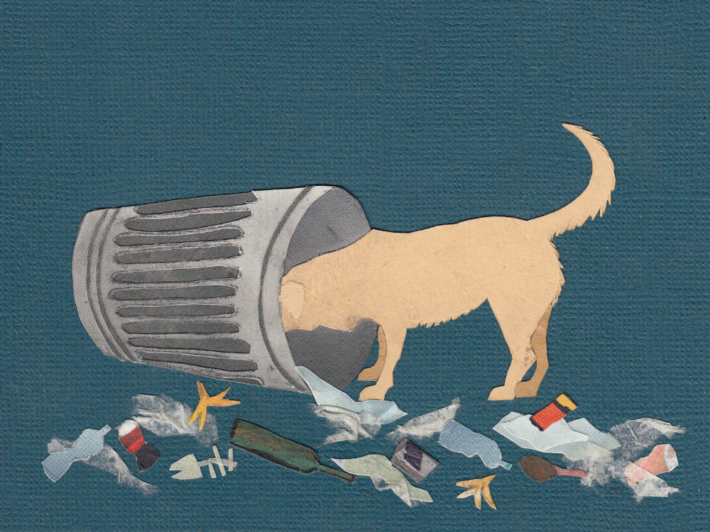 Labrador dog raiding bin garbage illustration | The Enlightened Hound