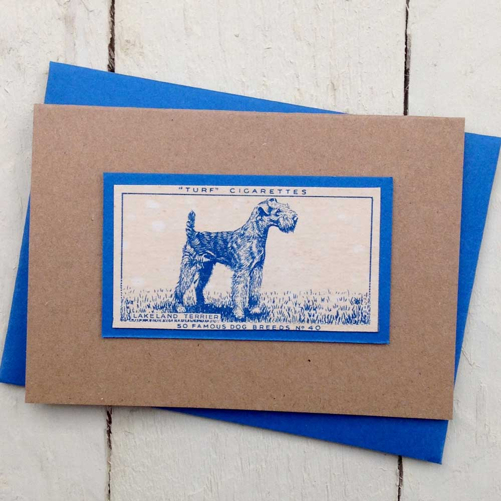 Lakeland Terrier greeting card | The Enlightened Hound