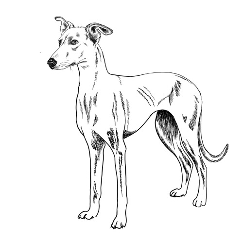 Lurcher Illustration by Debbie Kendall