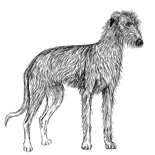 Lurcher Rough Coat Illustration by Debbie Kendall