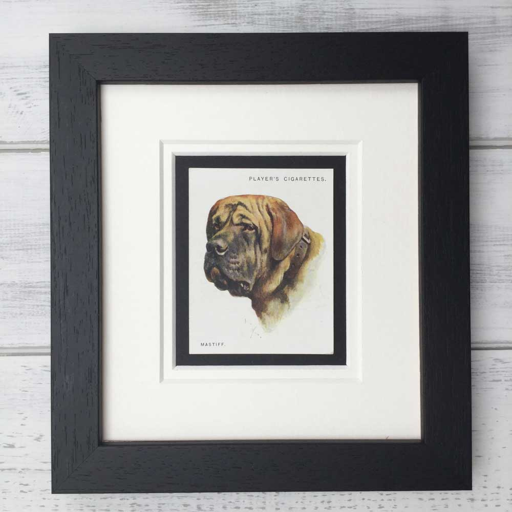 Vintage Gifts for Mastiff Lovers - The Enlightened Hound