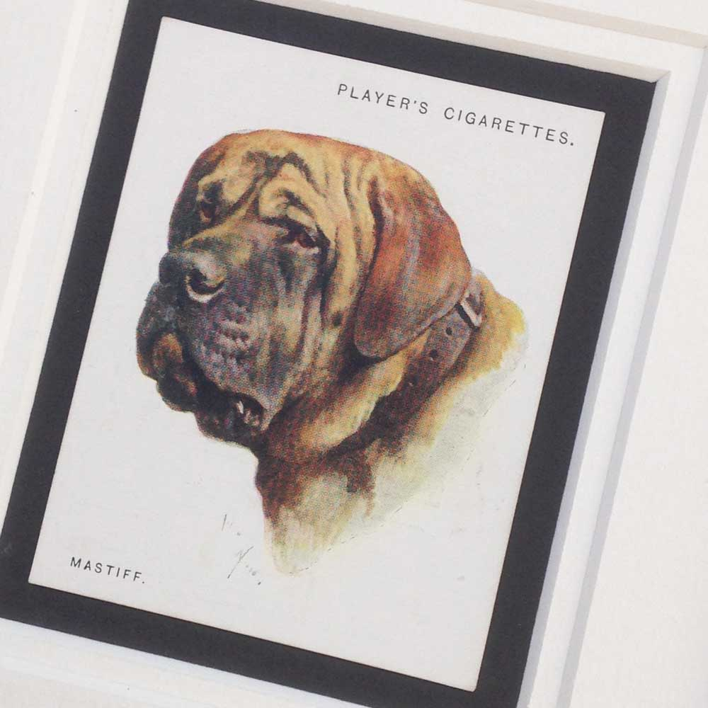 Mastiff Vintage Gifts - The Enlightened Hound