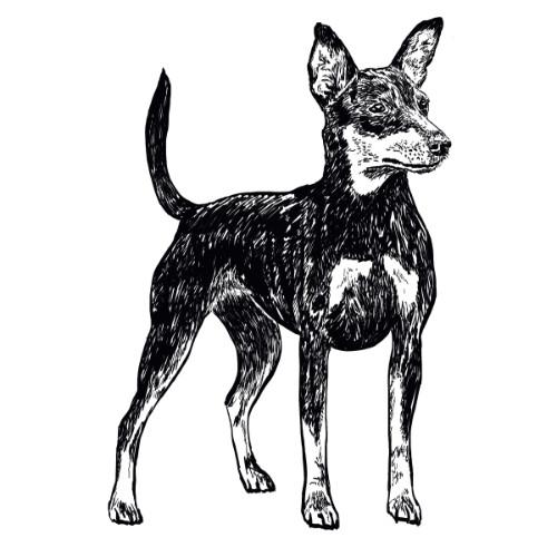 Miniature Pinscher Illustration   The Enlightened Hound