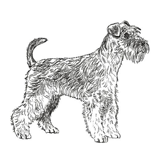 Miniature Schnauzer Illustration   The Enlightened Hound