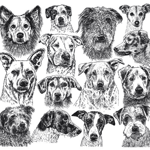 Mutts Mixed Breed Mongrel Dog Illustration   The Enlightened Hound
