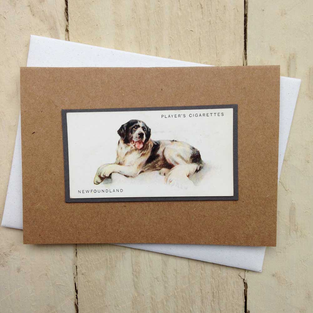 Newfoundland greeting card | The Enlightened Hound