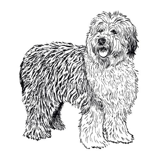 Old English Sheepdog Illustration   The Enlightened Hound