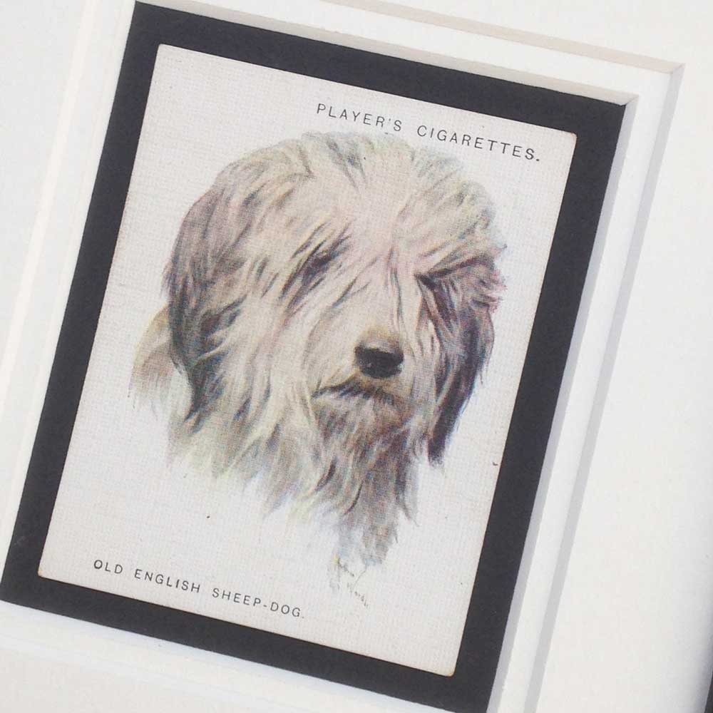 Old English Sheepdog Vintage Gifts - The Enlightened Hound