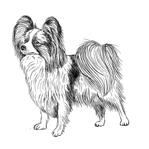 Papillon Illustration by Debbie Kendall
