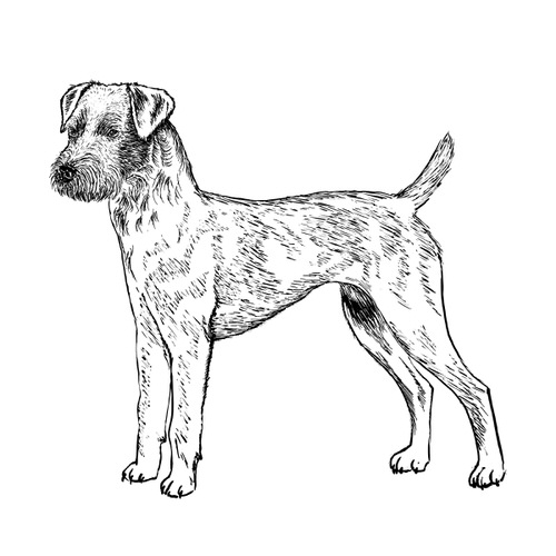 Patterdale Terrier Illustration by Debbie Kendall