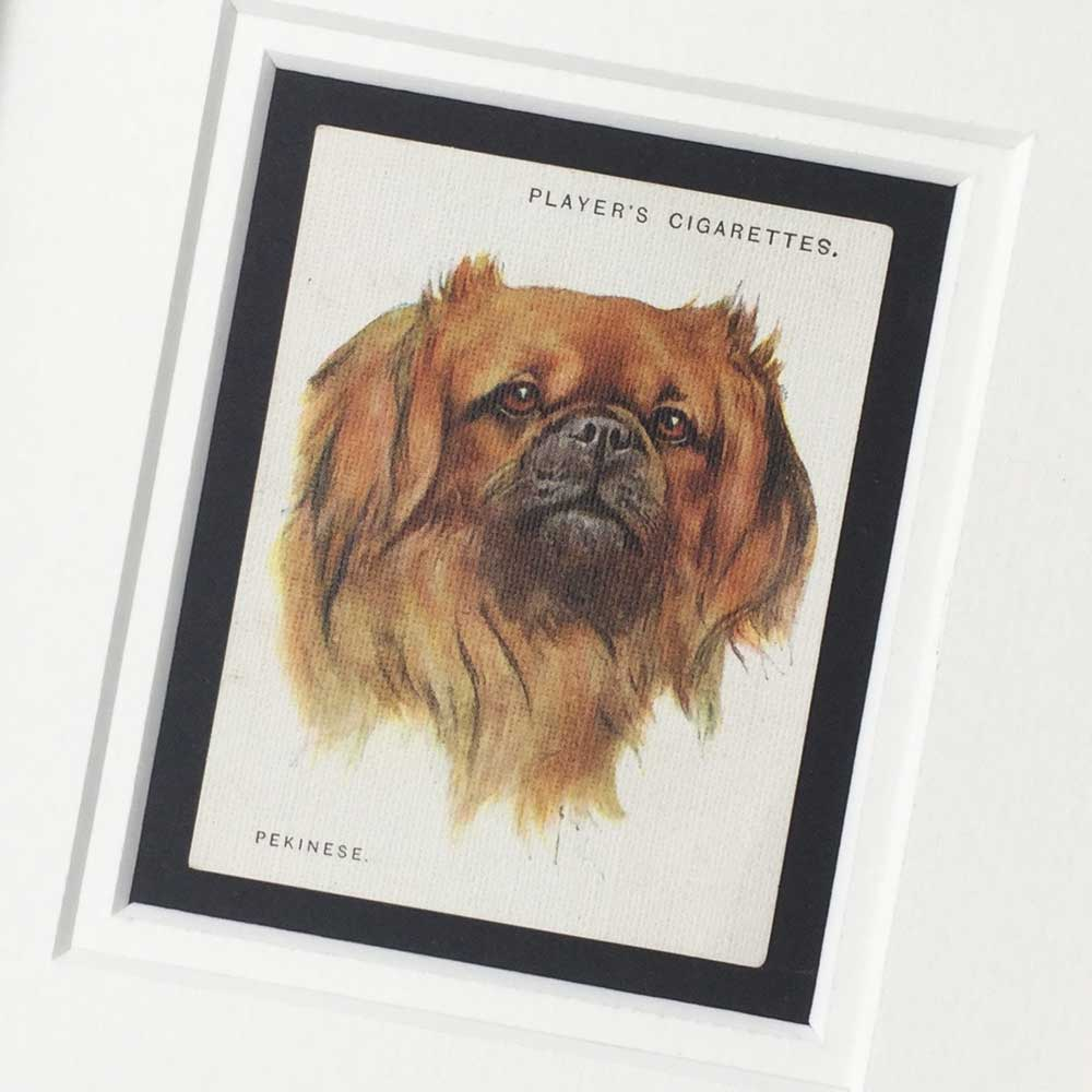 Pekingese Vintage Gifts - The Enlightened Hound