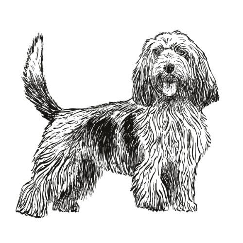 Petit Basset Griffon Vendeen Illustration   The Enlightened Hound