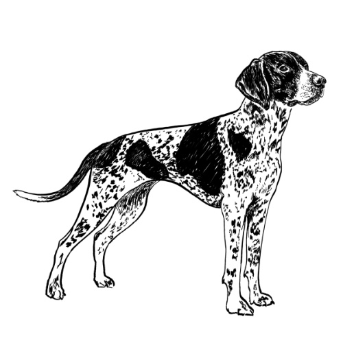 Pointer Illustration by Debbie Kendall