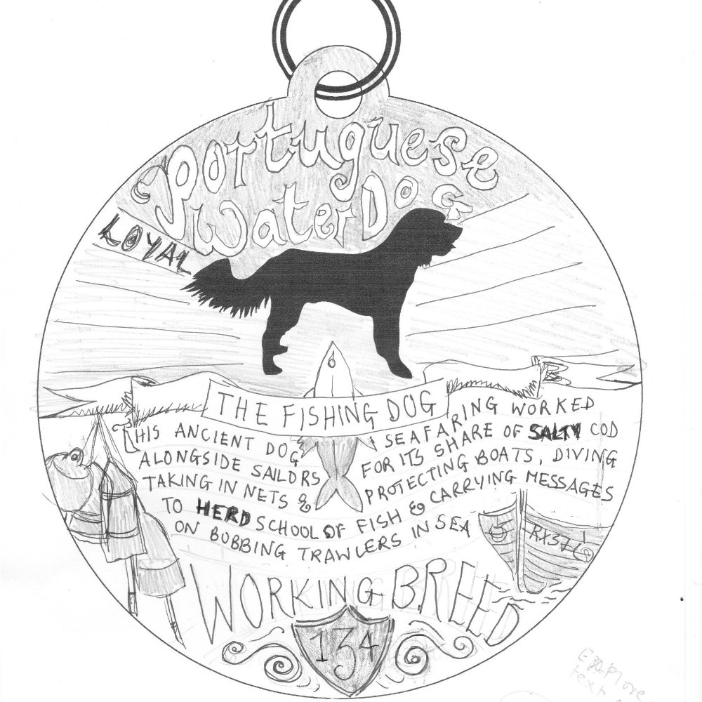 Portuguese Water Dog Art Sketch | The Enlightened Hound