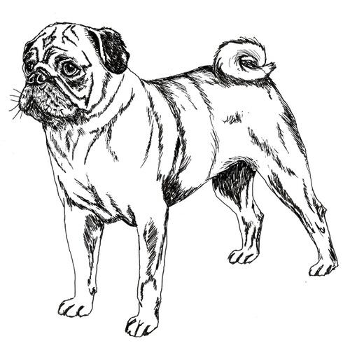 Pug Illustration by Debbie Kendall