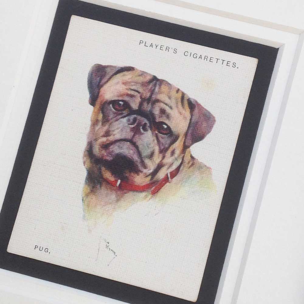 Pug Vintage Gifts - The Enlightened Hound