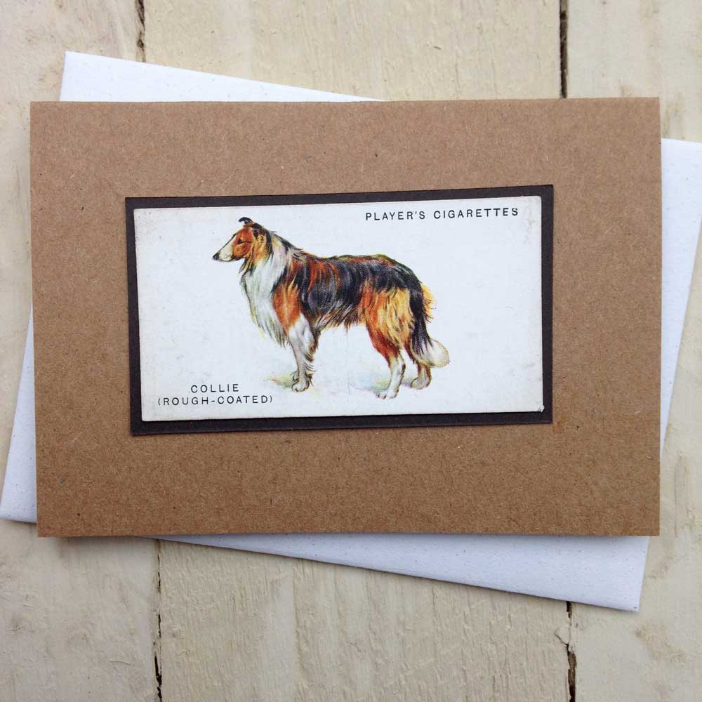Rough Collie Greeting Card - The Enlightened Hound