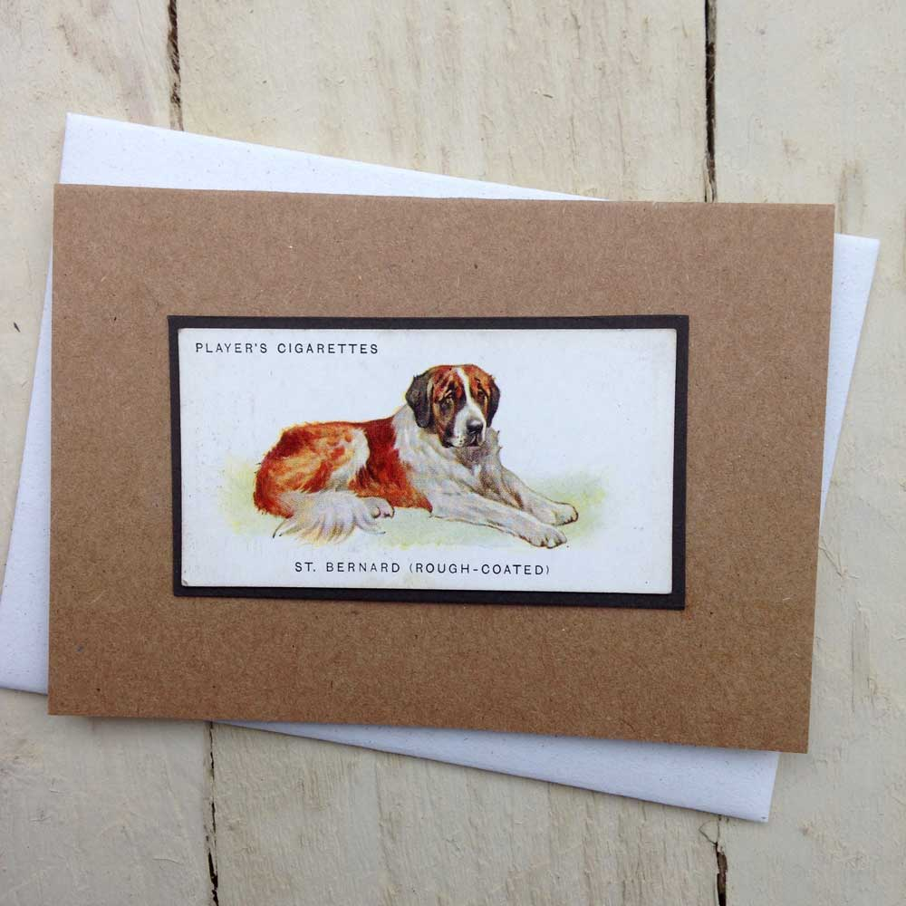 Saint Bernard Dog greeting card | The Enlightened Hound