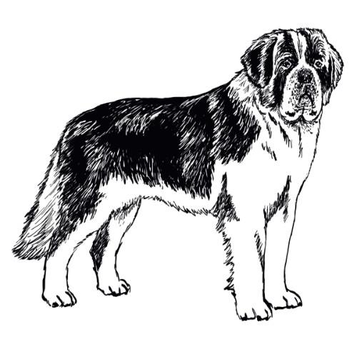 Saint Bernard Illustration   The Enlightened Hound