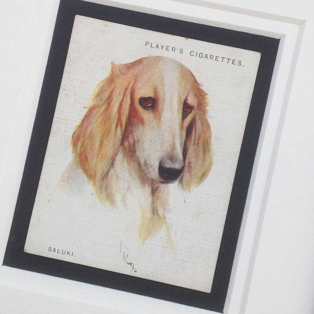 Saluki Vintage Gifts - The Enlightened Hound