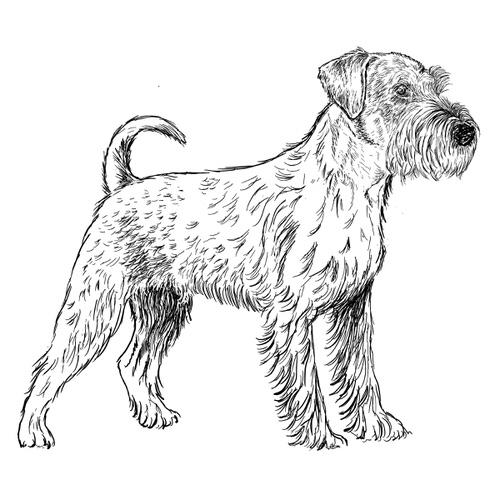 Schnauzer Illustration by Debbie Kendall