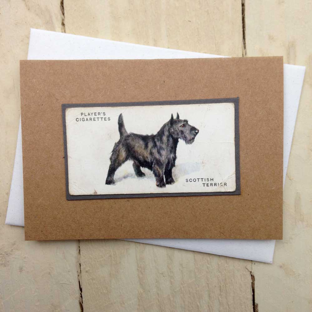 Scottish Terrier Greeting Card - The Enlightened Hound