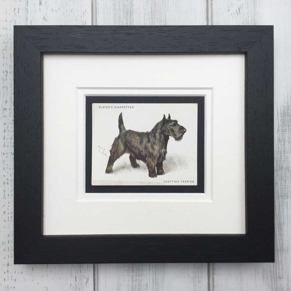 Scottish Terrier Vintage Print - The Enlightened Hound
