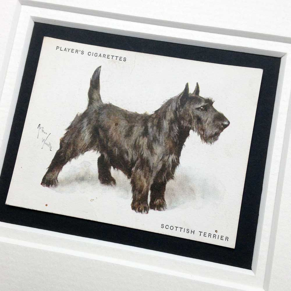 Scottish Terrier Vintage Gifts - The Enlightened Hound