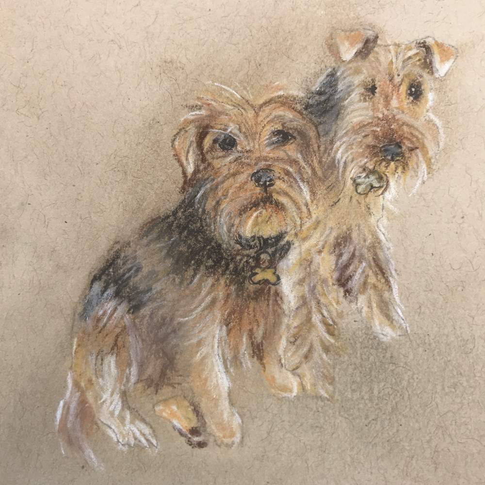 Scruffy Terrier Illustration | The Enlightened Hound