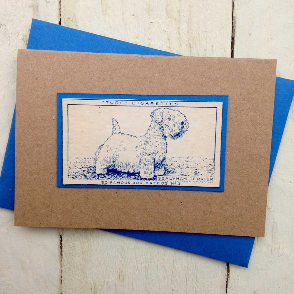 Sealyham Terrier greeting card - The Enlightened Hound
