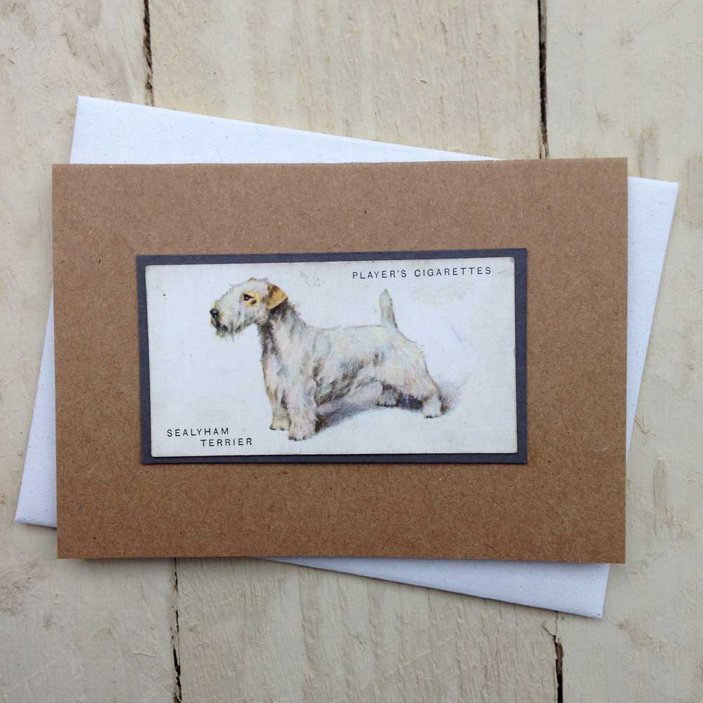 Sealyham Terrier card - The Enlightened Hound