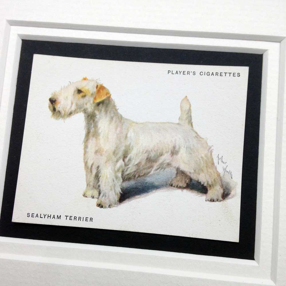Sealyham Terrier Vintage Gifts - The Enlightened Hound