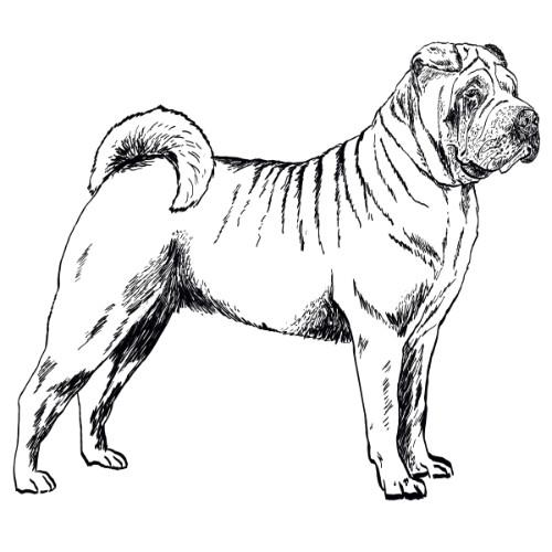 Shar Pei Illustration   The Enlightened Hound