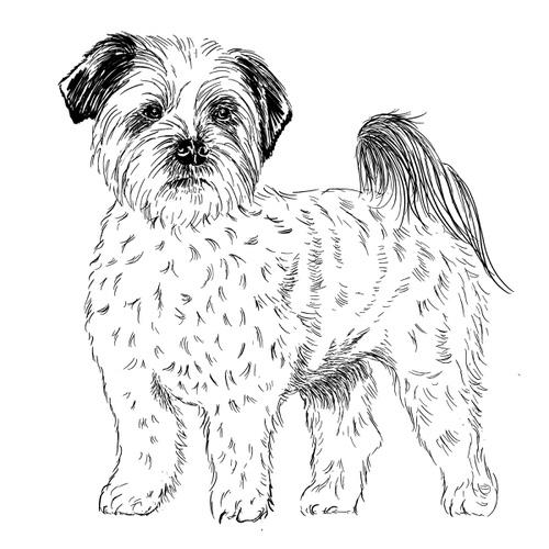 Shih Tzu Illustration by Debbie Kendall