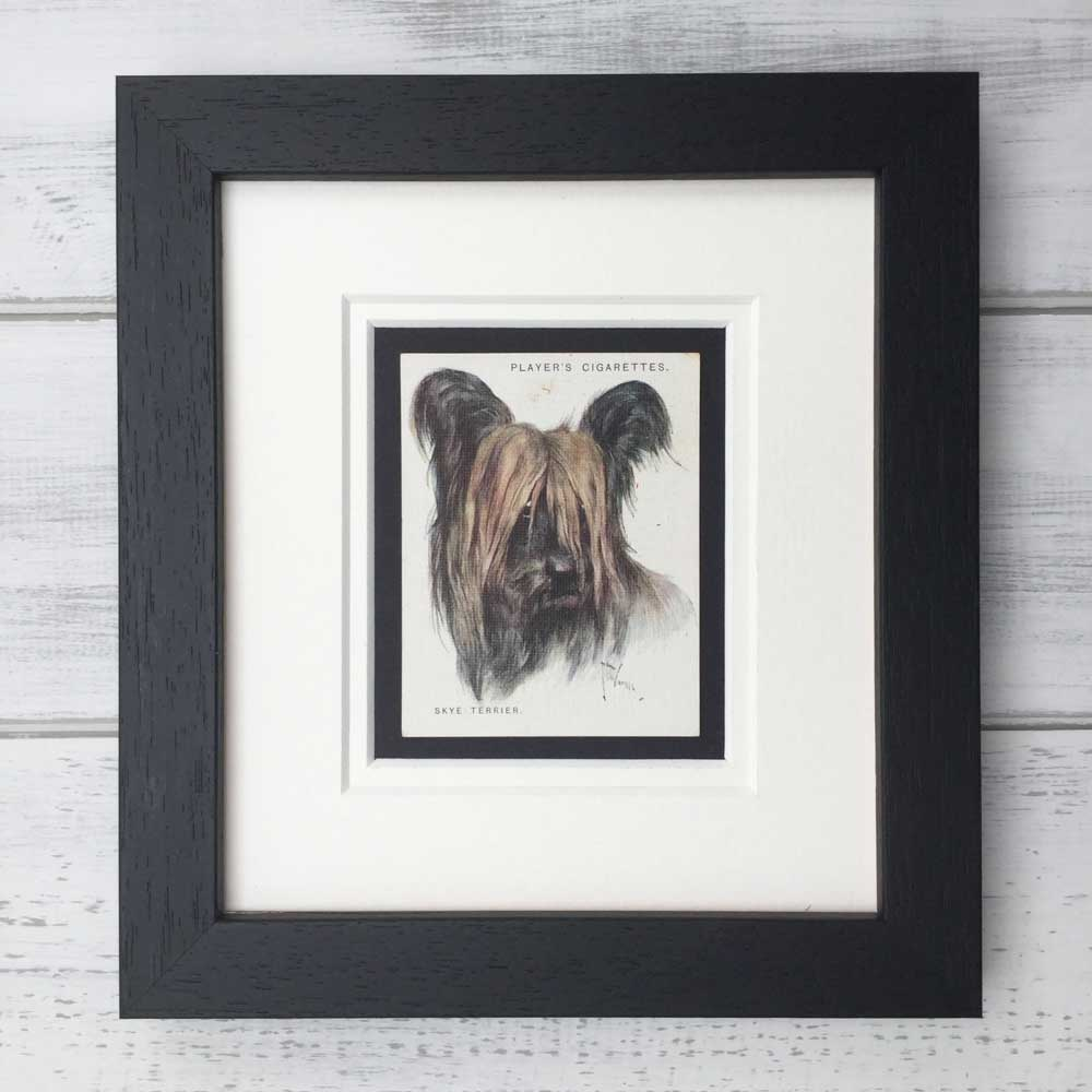 Vintage Gifts for Skye Terrier Lovers - The Enlightened Hound