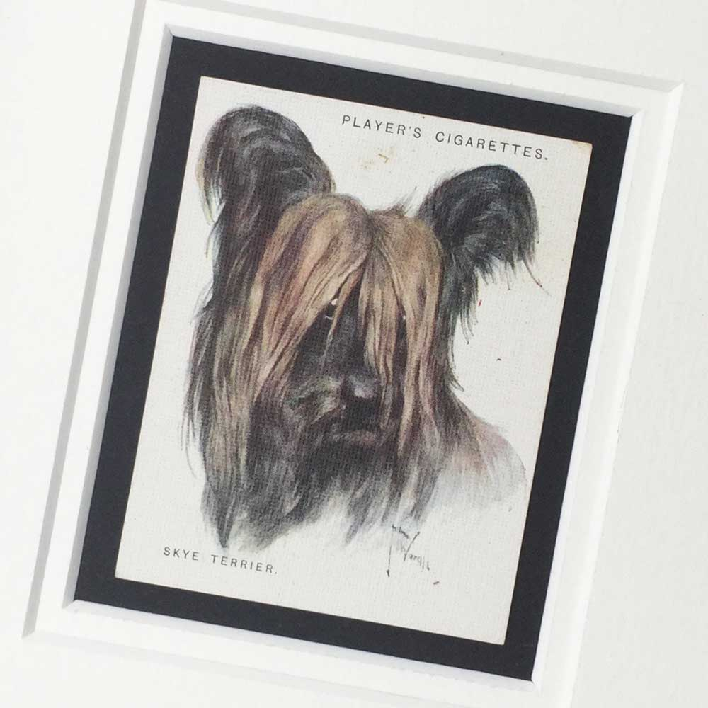 Skye Terrier Vintage Gifts - The Enlightened Hound