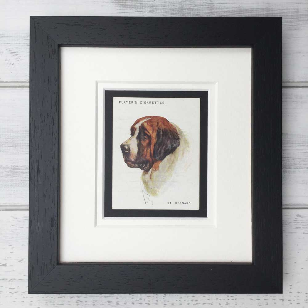 Vintage Gifts for Saint Bernard Lovers - The Enlightened Hound