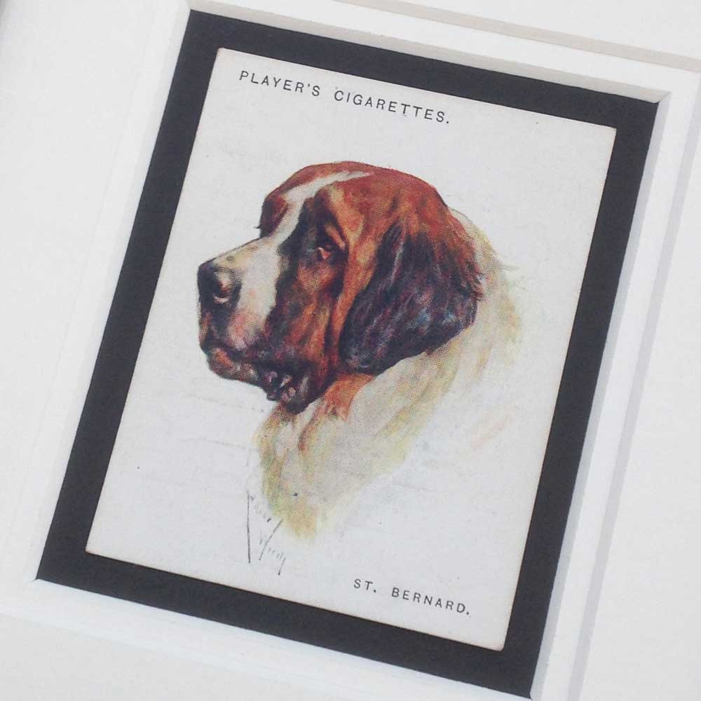 Saint Bernard Vintage Gifts - The Enlightened Hound