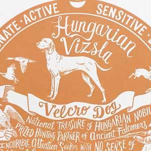 Hungarian Vizsla Print Detail by Debbie Kendall