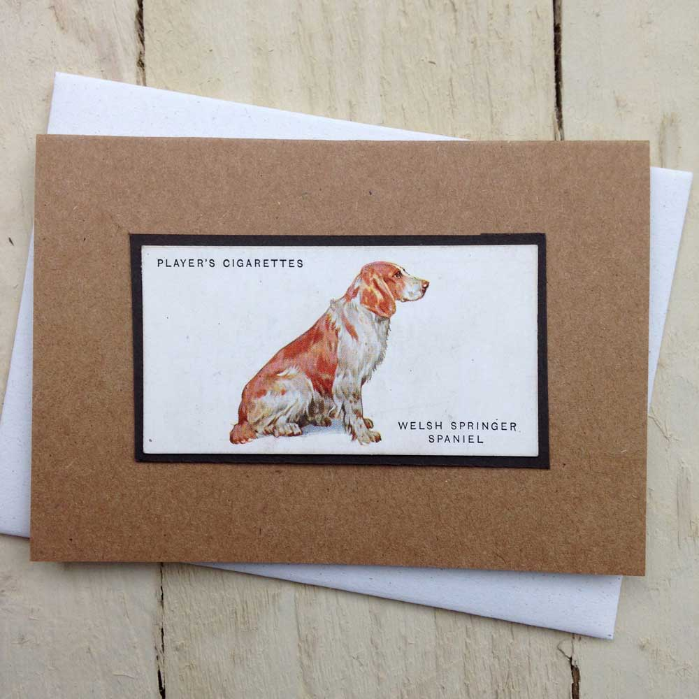 Springer Spaniel Vintage Greeting Card - The Enlightened Hound