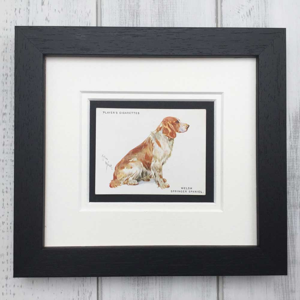 Vintage Gifts for Welsh Springer Spaniel Lovers - The Enlightened Hound