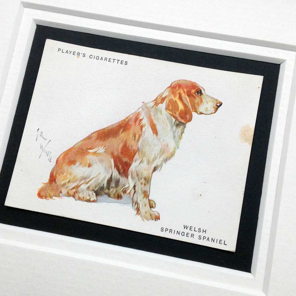 Welsh Springer Spaniel Vintage Gifts - The Enlightened Hound