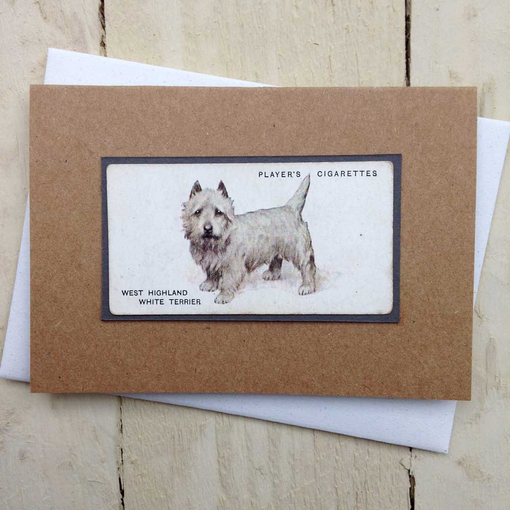 West Highland white terrier card - the Enlightened Hound