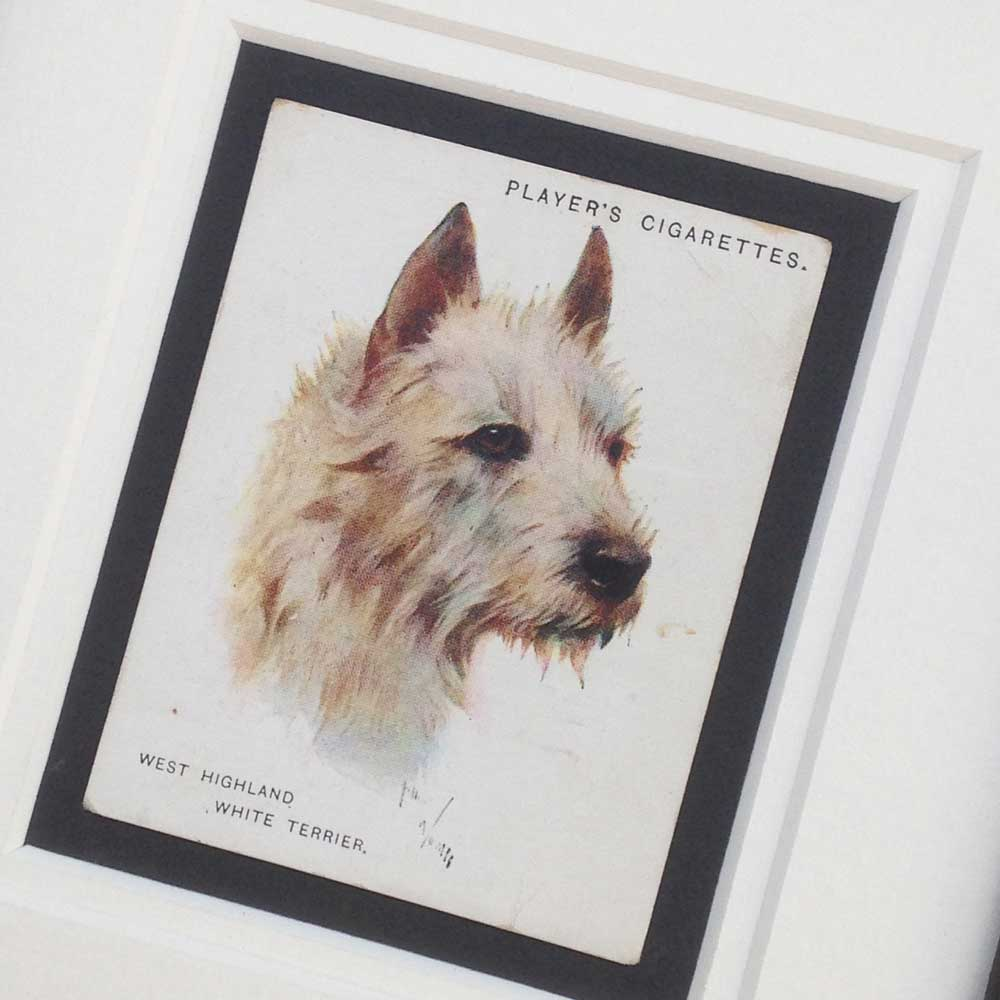 Westie Vintage Gifts - The Enlightened Hound