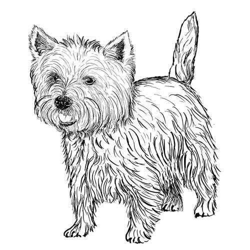 Westie Illustration by Debbie Kendall