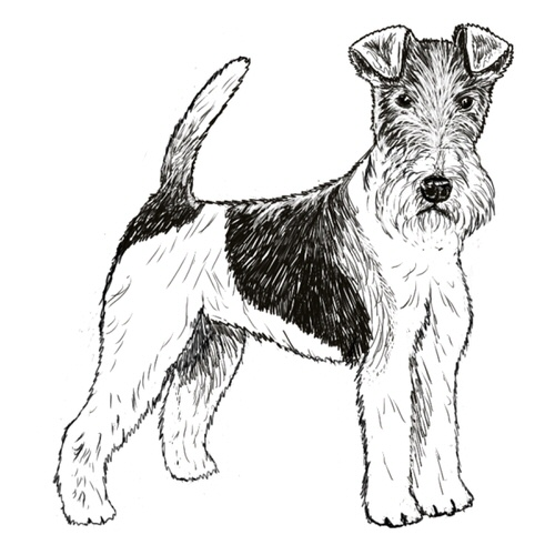 Wire Fox Terrier Illustration by Debbie Kendall