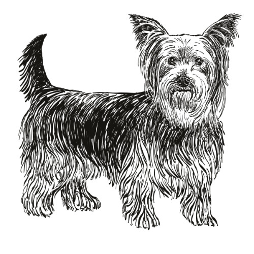 Yorkshire Terrier Illustration by Debbie Kendall